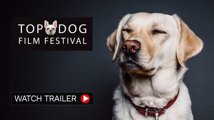 DOG FILM FESTIVAL: